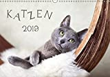 Katzen 2019 (Wandkalender 2019 DIN A3 quer): Katzen (Monatskalender, 14 Seiten ) (CALVENDO Tiere)