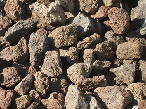 Der Naturstein Garten 25 kg (Vergleichspreis 10,15 € bei 20 Litern) Lava Mulch 16-32 mm - Pflanzgranulat Schneckenschutz Lavastein Lavamulch Aquarium Dachbegrünung Lavagranulat - Lieferung KOSTENLOS
