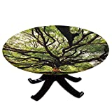 Elastic Edged Polyester Fitted Table Cover,The Largest Monkey Pod Tree in Thailand Eastern Green Big Branches Growth Eco Photo,Fits up to 36' Diameter Tables,The Ultimate Protection for Your Table,Gre