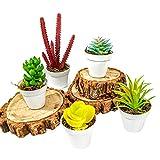 5 Suculentas Artificiais Variadas - Mini Vasinhos Decoração Casa Vasos Enfeite decorativo