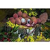 Puzzle Lychees Y Flores En Una Estaca De Madera Rompecabezas De Madera 500/1000/1500/2000/3000 Piezas Master Challenge Decoración Regalos 0116 (Color : Partition, Size : 3000 Pieces)