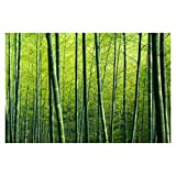 Bilderwelten Fotomural - Bamboo Forest - Mural apaisado papel pintado fotomurales murales pared papel para pared foto 3D mural pared barato decorativo, Dimensión Alto x Ancho: 190cm x 288cm