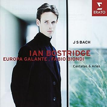 Bach: Cantatas & Arias