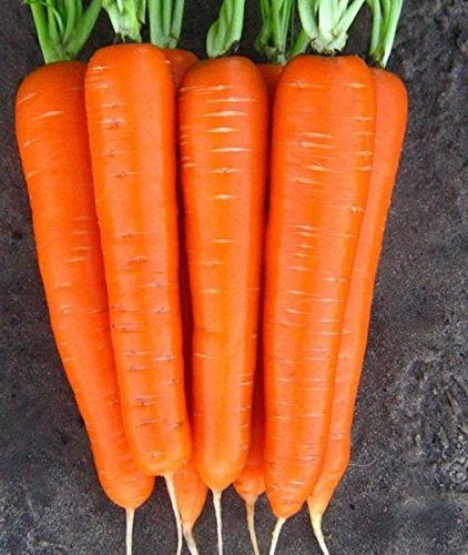 5 g / 200 graines de carotte Laguna F1