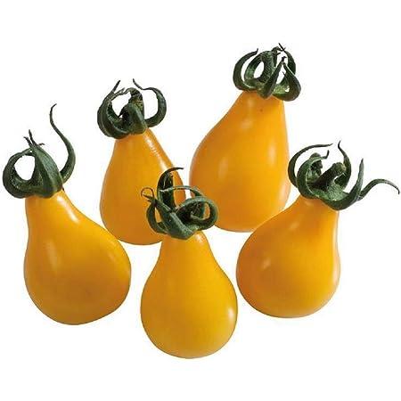 TOMATE Cornue des Andes 25 graines fruits allongés et juteux