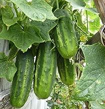 Arkansas Little Leaf Cucumber Seeds - productive, compact, and vigorous plants!(100 - Seeds)