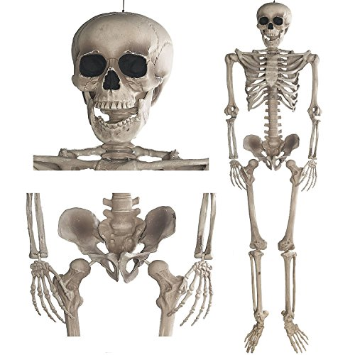 Goods & Gadgets Deko Skelett 160 cm - Party & Halloween Dekoration Ganzkörper Horror Skeleton