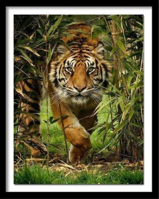nobrand Puzzles Tigre feroce di Animali da 1000 Pezzi Puzzle dal Regalo di Compleanno di Natale di Victoria Wadfllis