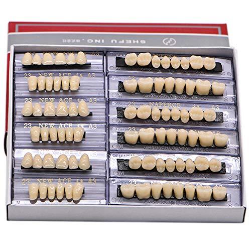 168 Pcs Dental Synthetic Resin Tooth Denture 6 Sets False Teeth 23 A3 Upper...