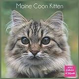Maine Coon Kitten Calendar 2022: Official Maine Coon Cat Breed Calendar 2022, Square Calendar