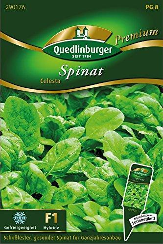 Spinat Celesta von Quedlinburger Saatgut