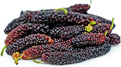 Pakistan Long Mulberry Tree - Morus Nigra Long Mulberry - Not Dwarf