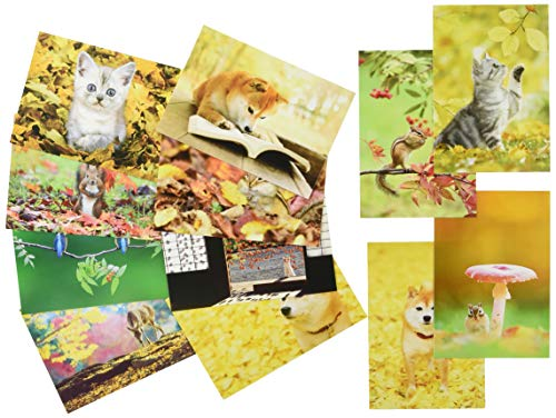 ピンナップ 人気柄 ポストカード 12種 各1枚 計12枚 セット 秋の動物達