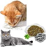 Catnip in Rattan Biologico 100% per Gatti e Gattini, Tutto in Polvere di Rattan d'Argento Naturale, Raccolto Selvatico Senza additivi o conservanti. (Green)