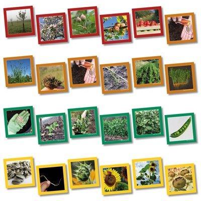 Wildgoose onderwijs sc1107 plant levenscyclus SEQUENCING kaart, 13,5 cm x 13,5 cm (20 stuks)