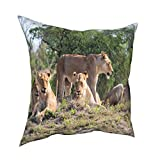 Minalo 3D Print Throw Pillow Cover Case,Lion Family in South Africa,Modern Pillowcase for Sofa Couch Bed Car Set Home Decor 18'x 18' in Pillowcase Cushion Covers Zipper 2pcs