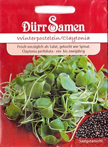 Winterpostelein, Claytonia perfoliata, ca. 1000 Samen