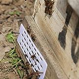 火の色 養蜂用 女王バチ フレーム防止 防止装置 蜜蜂 逃去防止器 巣箱用品 PP製 養蜂ツール 巣箱 分蜂 便利 実用的 巣箱用品 養蜂家 10個セット 白い