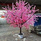 ライトピンク10個:20日本のピンクの桜の種ブロッサム桜の木オリエンタルスウィートサクラ属