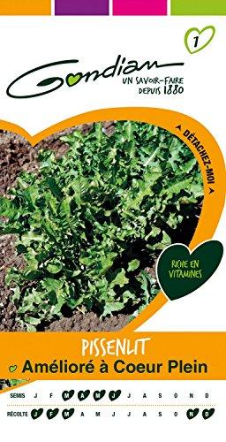Gondian 153745 Semences - Pissenlit Ameliore à Coeur Plein - CP 1, Vert, 1x8.1x16 cm