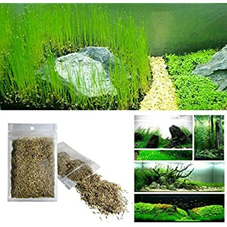 NANCY99 Aquarium Water Grass Seeds Aquarium Green Plant Love Grass Seeds