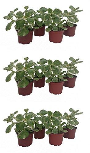 Dominik Blumen und Pflanzen, Verpiss Dich Pflanze, 12 Pflanzen