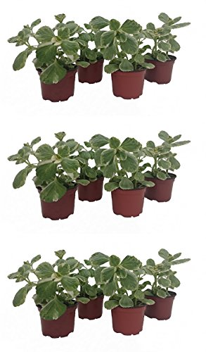 Dominik Blumen und Pflanzen, Verpiss...