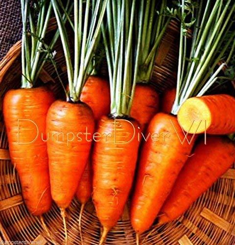 Organique rouge carotte Chantenay à cœur graines de SOL LOURD NON-OGM Heirloom