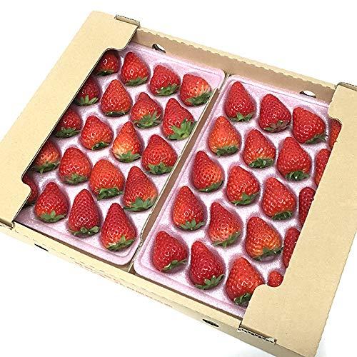 静岡産きらぴ香いちご(20~30粒)苺フルーツ(2トレー(約0.6kg))