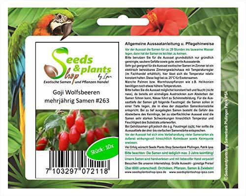 10x Goji Wolfsbeeren mehrjährig Samen Frucht Garten Gesund Pflanze #263