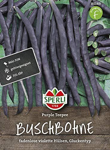 Bohnen - BuschBohnen - Purple Teepee von Sperli-Samen [MHD 01/2019]