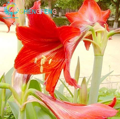 Green Seeds Co. 50 Pcs/Sac Plantes En Pot Lily plantes rares Plantes D'intérieur Bonsaï Intérieur Diy plant Semillas Mixed Colors emballage 2016: Kaki Foncé