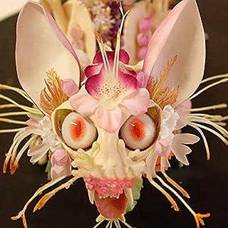 DaDago 30 Unids/Pack Semillas De Orquídeas De Cara De Mono Japonés Semillas De Flores De Dragón De Jardín