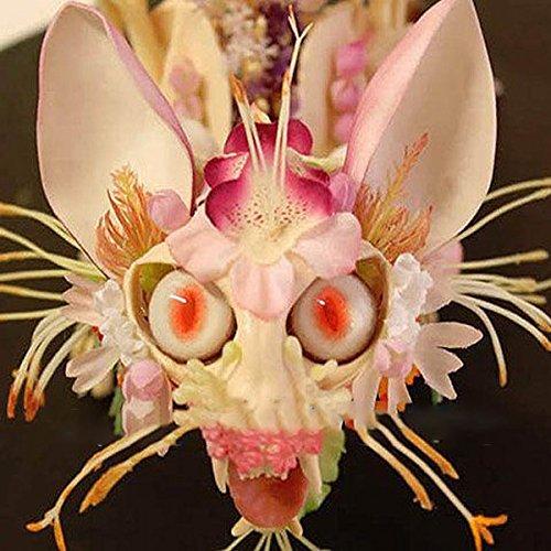 KINGDUO Egrow 30Pcs/Pack Japanischen Affengesicht Orchidee Samen Garten Dragon Flower Seeds