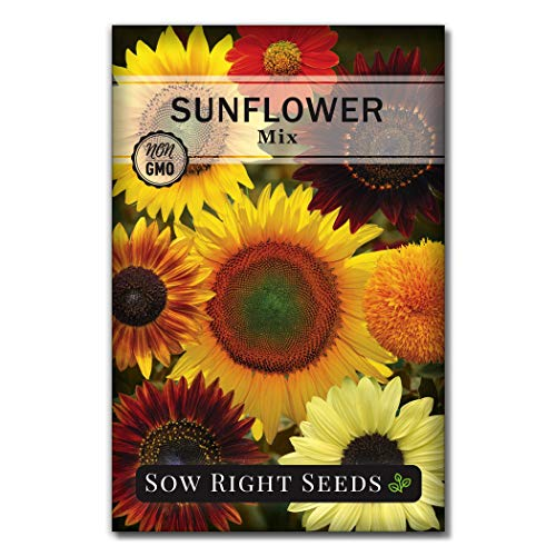 Sow Right Seeds – Large Full-Color Packet of Mixed Sunflower Seed to Plant