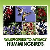 Hummingbird Nectar Wildflower Se...