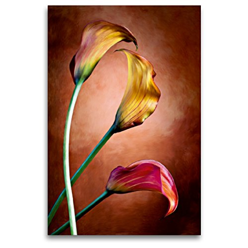 CALVENDO Premium Textil-Leinwand 80 x 120 cm Hoch-Format Zantedeschia Aethiopica, Calla Blumen, Leinwanddruck von Val Thoermer