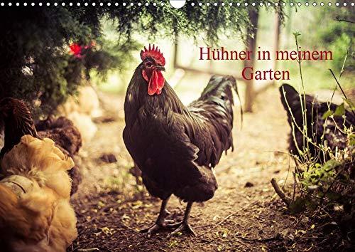 Hühner in meinem Garten (Wandkalender 2020 DIN A3 quer): professionelle Hühnerfotos (Monatskalender, 14 Seiten ) (CALVENDO Tiere)