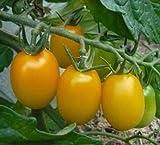 てしまの苗 ミニトマト苗 イエローアイコ 9cmポット 断根接木苗 野菜苗