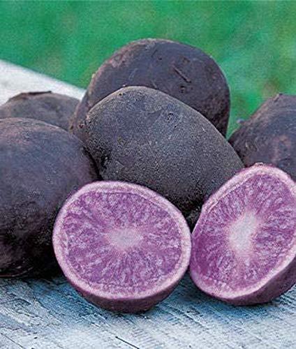 100 Pcs Potato Seeds Suitable for Garden/Vegetable Gardening Vegetables Rare Varieties of Purple Vegetables