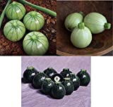 David's Garden Seeds Collection Set Zucchini Round 3 Varieties 7433 (Multi) 75 Non-GMO, Hybrid Seeds