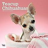 Teacup Chihuahuas 2020 - 16-Monatskalender mit freier DogDays-App: Original BrownTrout-Kalender [Mehrsprachig] [Kalender] (Wall-Kalender)