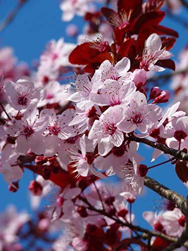 Rompecabezas Para Adultos 1000 Piezas Flor De Cerezo Flor De Cerezo Decoración Para El Hogar Juego De Juguete Ensamblaje De Madera