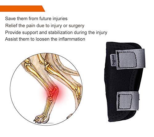 Rantow - Attelle pour Chien - Protection Contre l'arthrite - Protège Contre Les blessures - Aide à Perdre sa stabilité - pour Chiens de Petite Taille et de Taille
