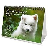 Hundezauber Kleine Hunde DIN A5 Tischkalender für 2021 Welpen und kleine Hunde - Seelenzauber