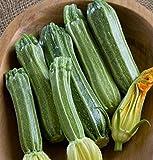 David's Garden Seeds Zucchini Costata Romanesco 2752 (Green) 25 Non-GMO, Heirloom Seeds