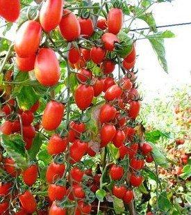 100pcs / Pack. Red Pear tomate Semences potagères Semences pour Diy jardin 49%