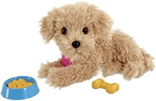 Scruffies - Charlie - Adopt a pet - Feed & Treat Puppy