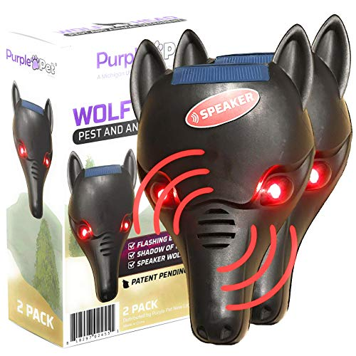 iPrimio Wolf Head with Flashing Eye Lights with Back Light to Create Silhouette - Scares Deer (1...