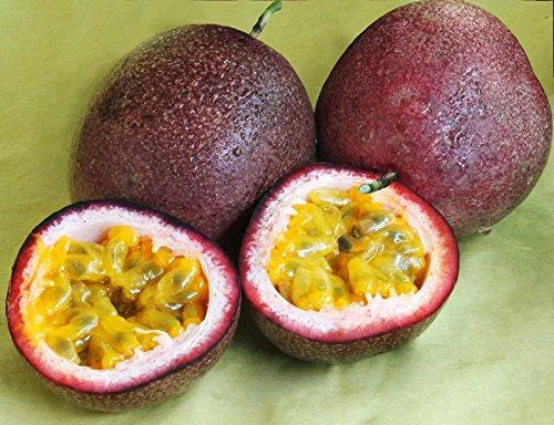 graines de fruits de la passion de l'emballage d'origine Graines de Passiflora edulis organique nutritifs graines de fruits de jardin Granadilla - 40 pcs